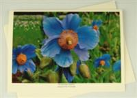 Eco friendly Card Photo Blue Poppy