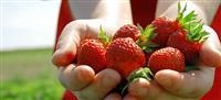 Environmentally Responsible UPick Farm