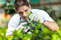 Green job seekers