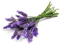 Organic Aromatic Essential Oils