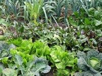 Sustainable Organic Stewardship